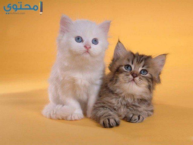 رمزيات قطط حلوة