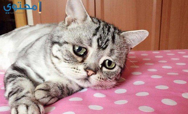 أجمل صور قطط حزينة