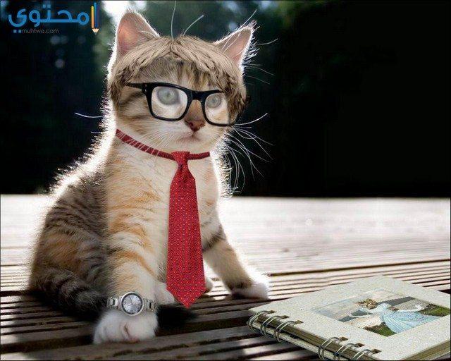 صور قطط مضحكة جديدة