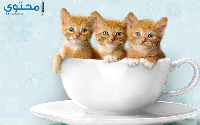 قطط صغيرة حلوة