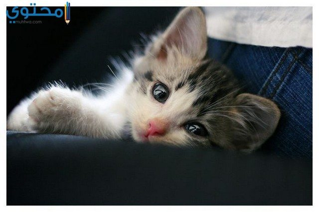 رمزيات قطط حزينة