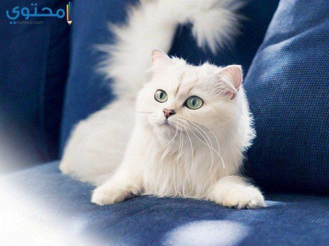 صور قطط روعة