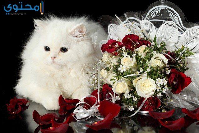 صور قطط جميلة جدا