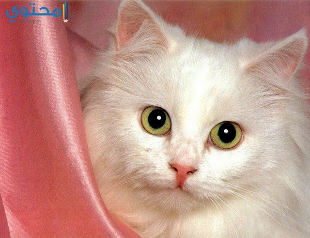صور قطط تجنن