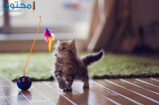 رمزيات قطط مضحكة