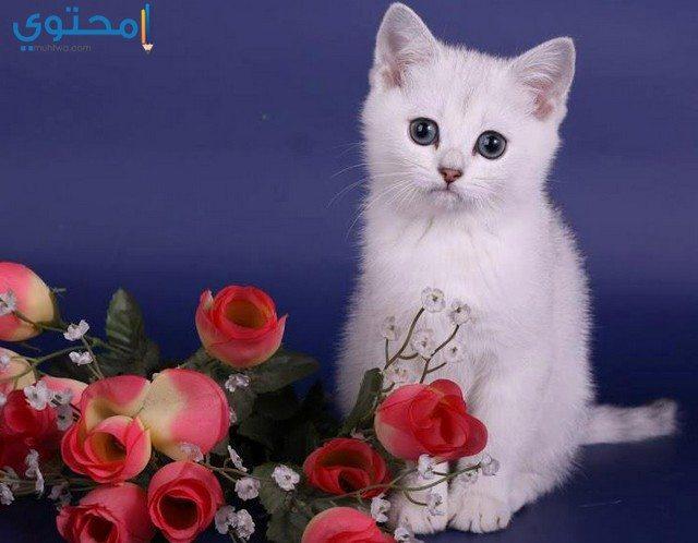 خلفيات قطط جميلة