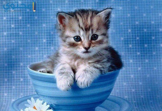 خلفيات قطط جديدة