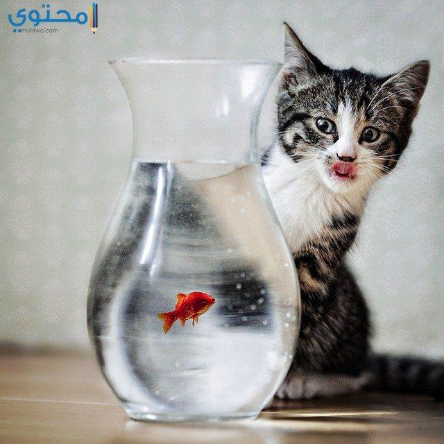 أحلى صور قطط مضحكة