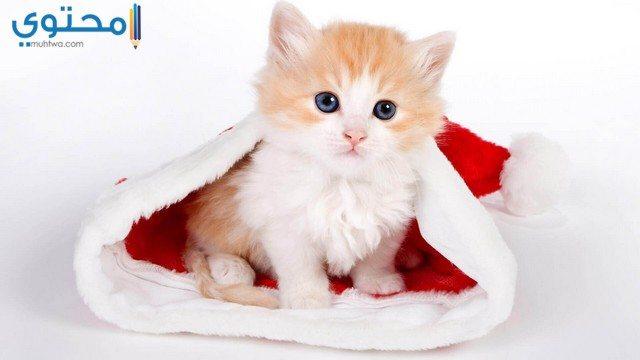 قطط صغيرة جميلة