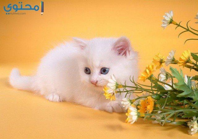 خلفيات قطط للفيس بوك