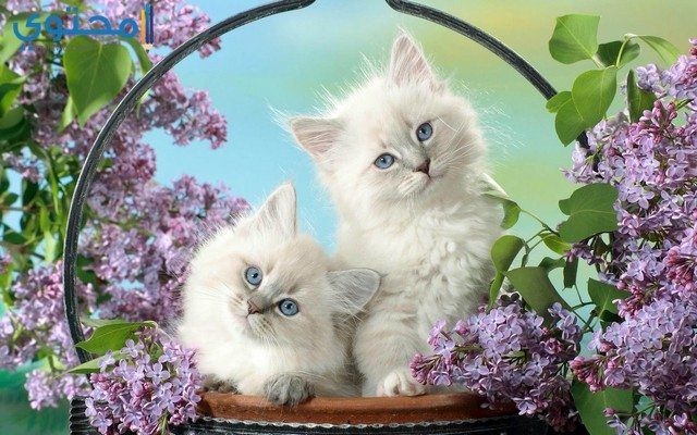 خلفيات قطط حلوة