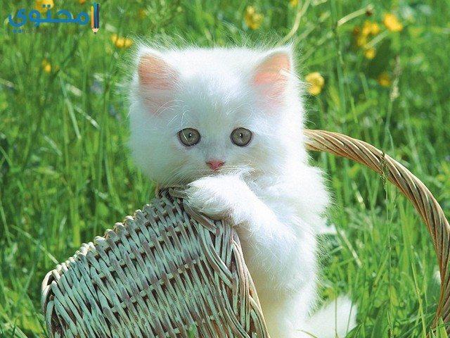 صور قطط جديدة