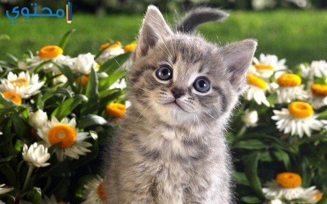 صور قطط فيس بوك