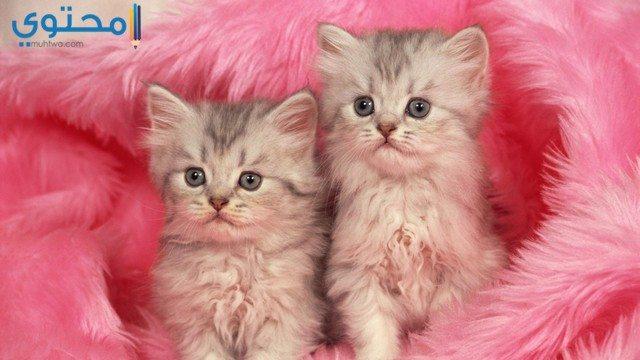 خلفيات قطط كيوت