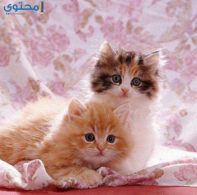 رمزيات قطط أنستقرام