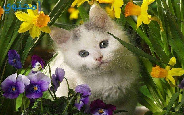 خلفيات قطط رائعة