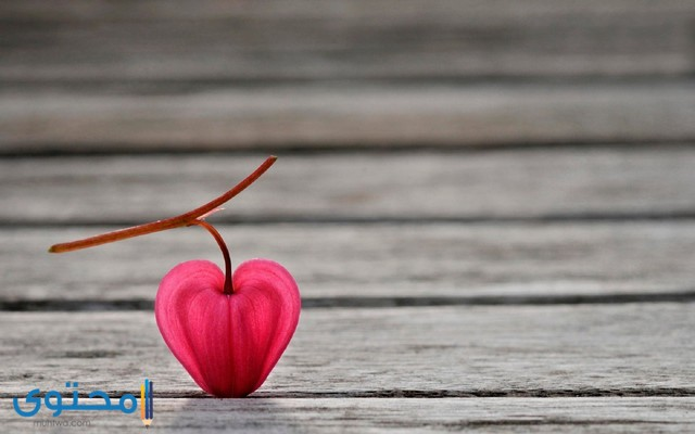 حالات واتس قلوب حب