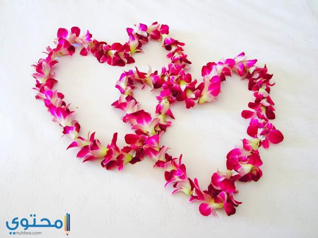 خلفيات قلوب ورد جميلة جدا