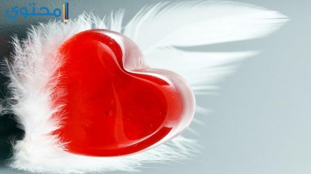 قلب أحمر للحب