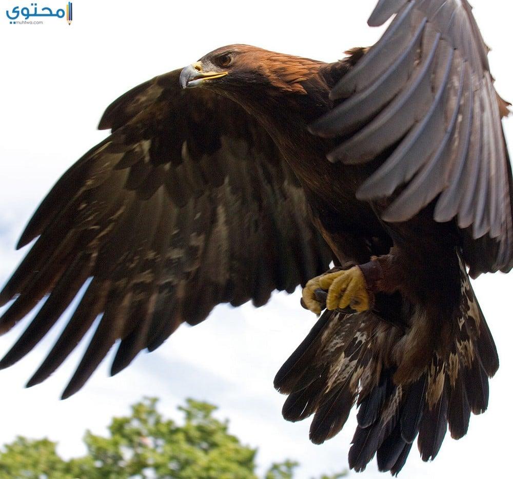 أجمل الصور لطائر النسر