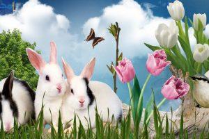 صور وخلفيات أرانب كيوت حديثة