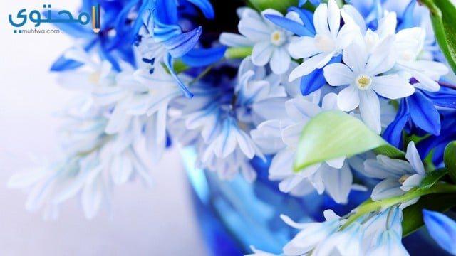 أحلى صور الورود
