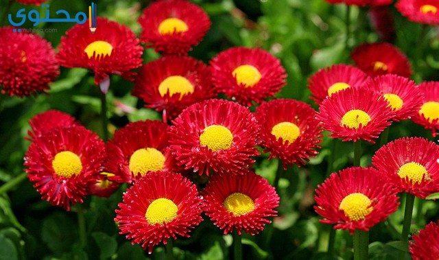 أجمل الصور الورود