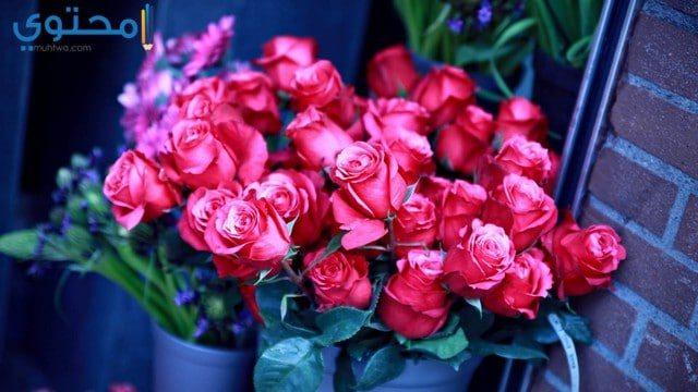 أحلى الورود الرومانسية