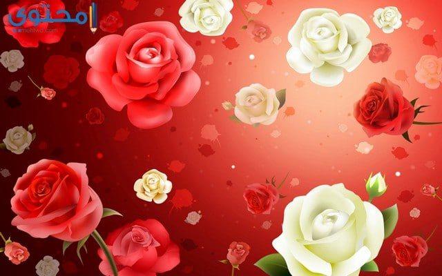 اجمل خلفيات الورود