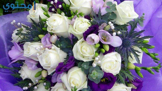 أروع صور الورود