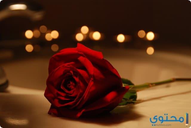 Romantic roses 2018