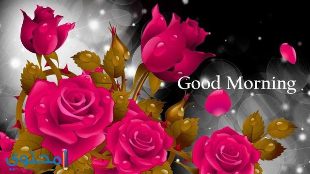 ورد صباح الخير ومساء الخير