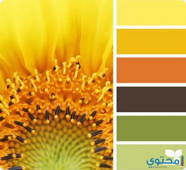 اختيار اللون الانسب لشخصيتك