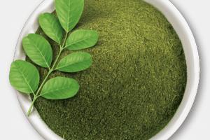 فوائد عشب الموربنجا (البان الزيتوني) للصحة