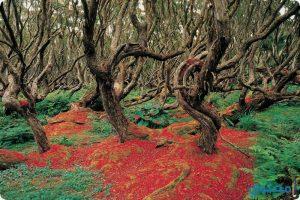 بالصور قائمة بأجمل وأغرب غابات العالم