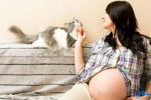 جرثومة الحمل (مرض القطط) وتأثيرها على الجنين