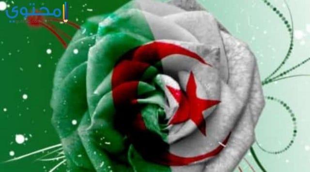 أحدث خلفيات العلم الجزائري