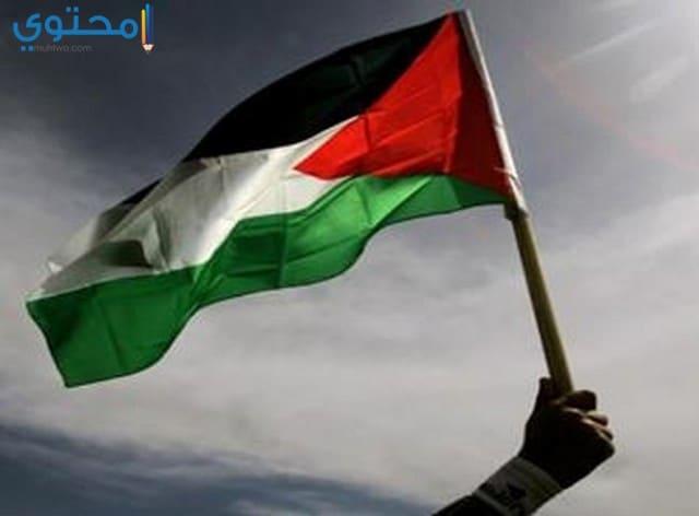 أروع خلفيات علم فلسطين