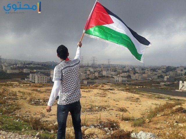 خلفيات علم فلسطين جديدة