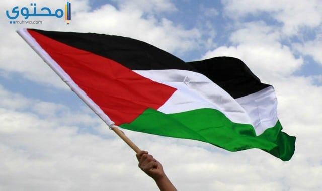 خلفيات علم فلسطين لسطح المكتب