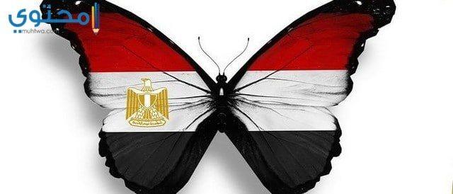 خلفيات علم مصر للموبايل