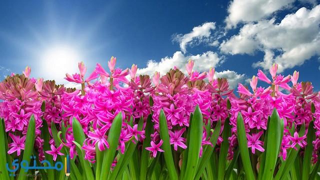 صور عيد الربيع جميلة