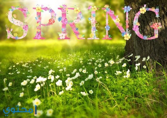 كلام جميل عن الربيع