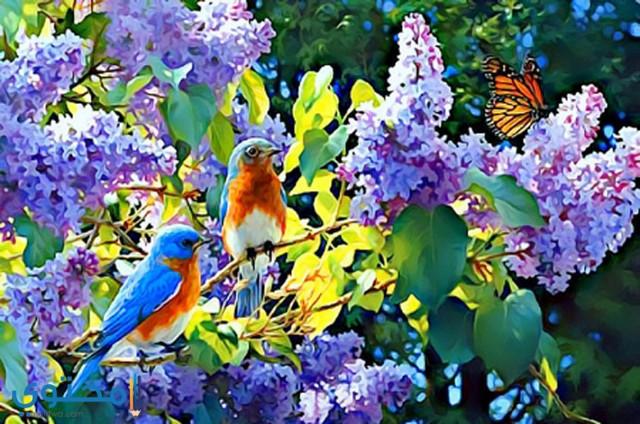 صور عيد الربيع جديدة