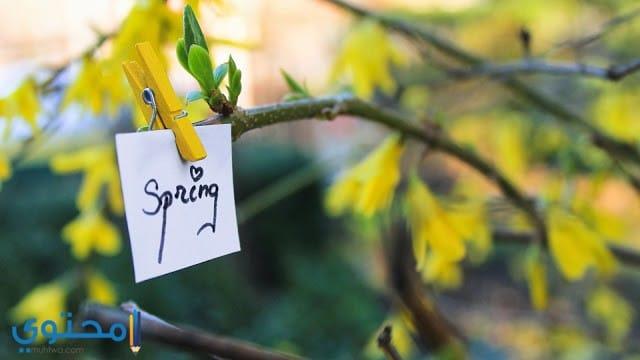 عيد الربيع
