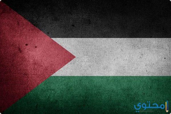 كلمة عن غزة