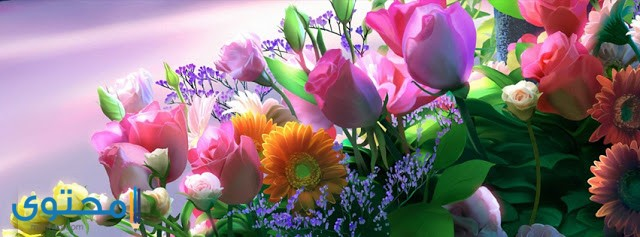 facebook covers flowers