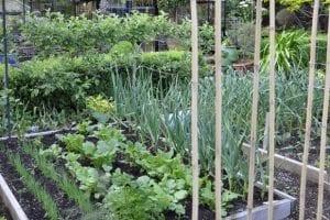 فائدة زرع الخضروات في المنزل