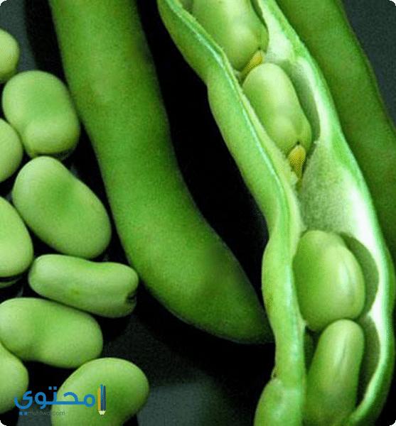 فوائد الفول الأخضر للحامل بالتفصيل - موقع محتوى