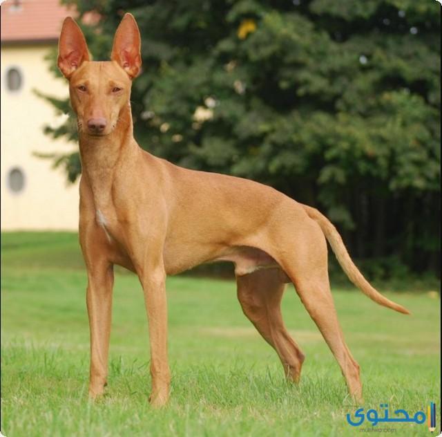 قائمة احسن الكلاب في العالم 2021